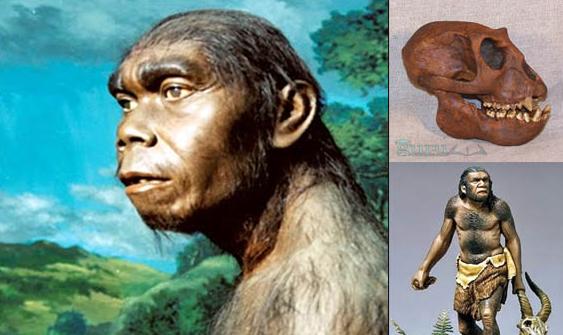 Contoh-Meganthropus-Paleojavanicus