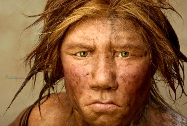 Manusia-Homo-Neanderthalensis