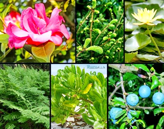 Klasifikasi-Kingdom-Plantae