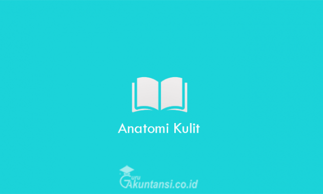 Anatomi-Kulit