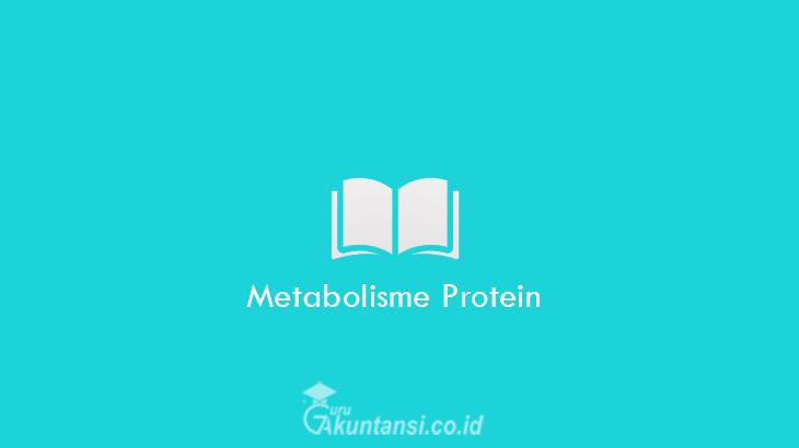 Metabolisme-Protein