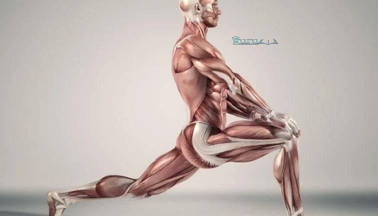Contoh-Jaringan-Otot