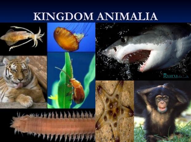 Contoh-Kingdom-Animalia
