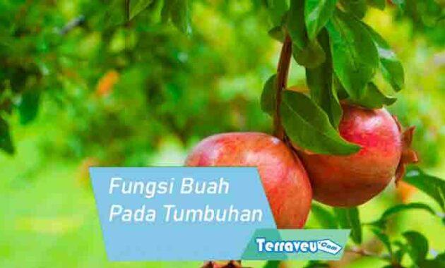 fungsi buah pada tumbuhan
