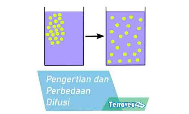 pengertian dan perbedaan difusi